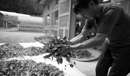 新しい日本茶=世界に通用する発酵茶づくりの挑戦